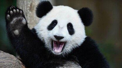 数据分析神器Pandas:如何用1行Python代码挖掘数据?