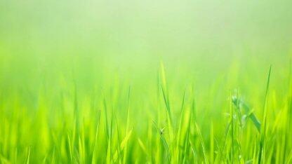 使用 AWS Greengrass 在边缘执行机器学习推断