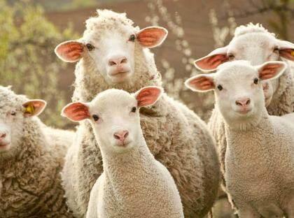 """打击""""薅羊毛"""",看唯品会的黑灰产对抗实践"""