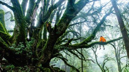 使用随机森林、神经自编码和隔离森林技术检测欺诈内容