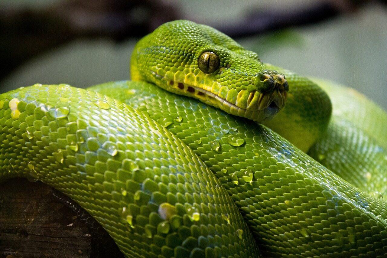 9月编程语言排行榜:Python霸榜 Kotlin排名上升最快